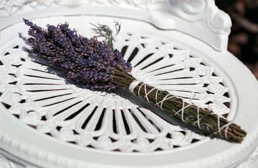 lavender-1279689_640