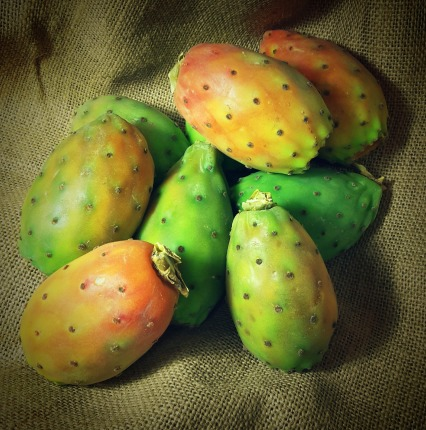 prickly-pear-1124343_1280
